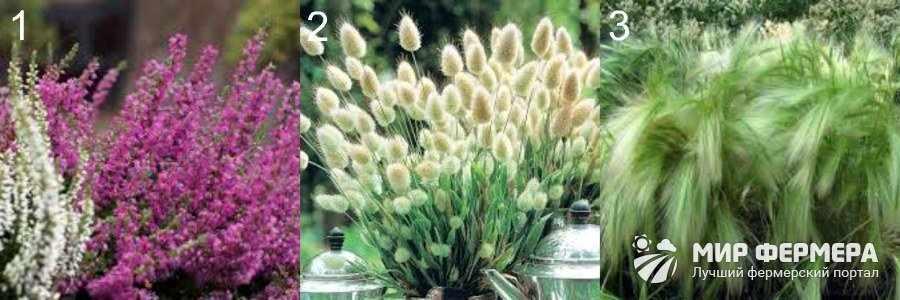 Невысокие декоративные растения