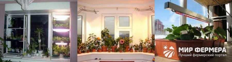 Зимнее освещение комнатных растений