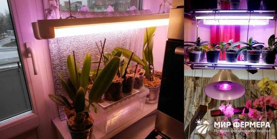 Лампы для подсветки орхидей