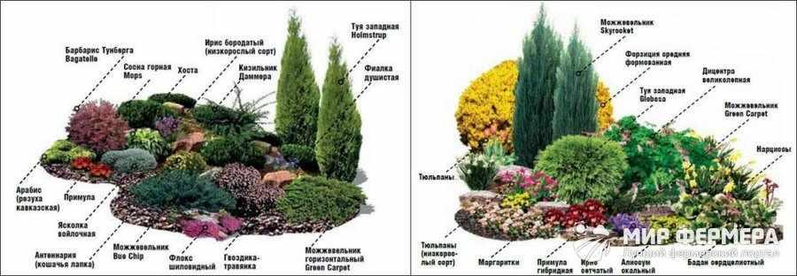 Хвойные для украшения сада