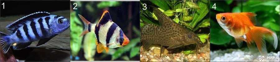 Каких рыбок выгодно разводить