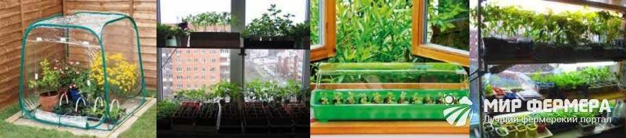 Выращивание рассады на подоконнике