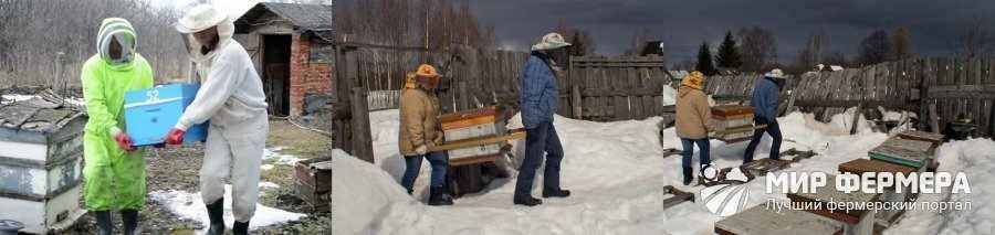 Как вынести пчел из зимовника
