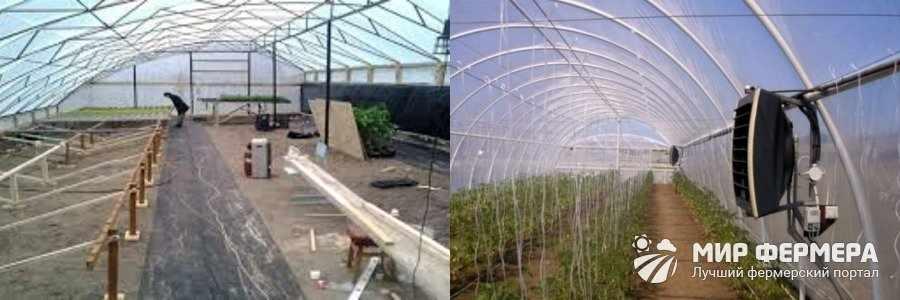 Выращивание трюфелей в теплице