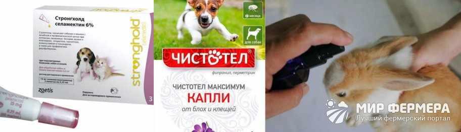 Лекарства от ушного клеща для кроликов