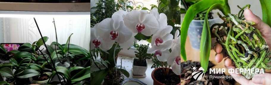 Как содержать орхидею