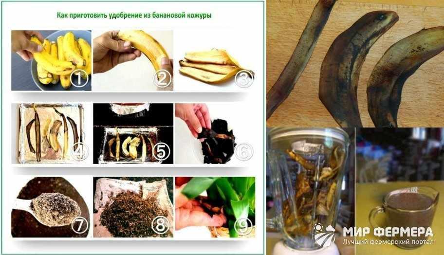 Удобрение из сушеных банановых шкурок