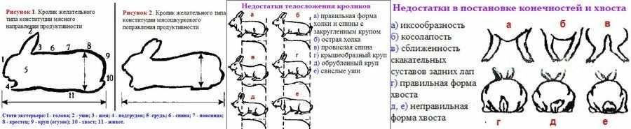 Как выбрать кролика визуально