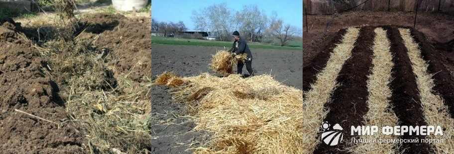 Грядка для выращивания картошки
