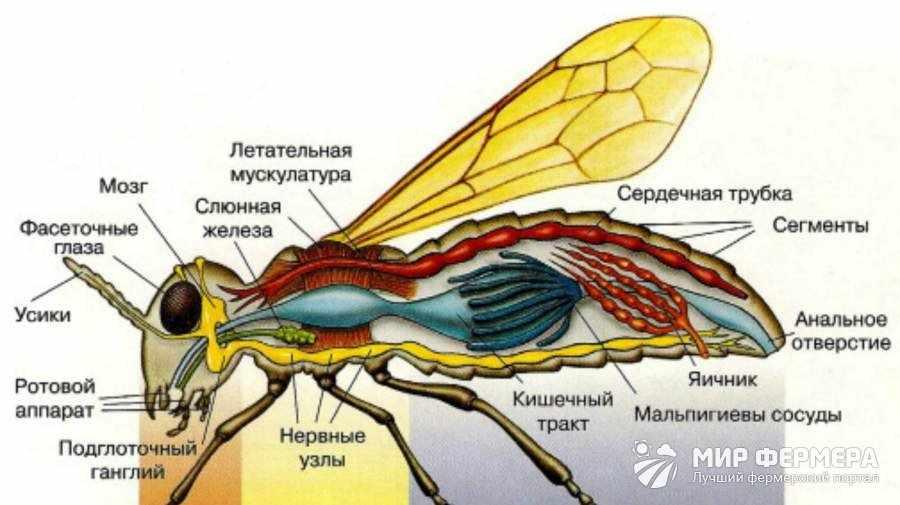 Почему болеют пчелы