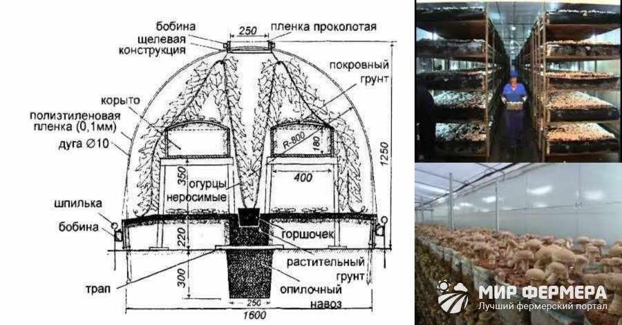 Как выращивают белые грибы