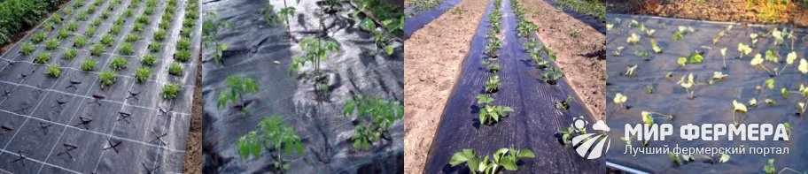 Польза черной пленки от сорняков