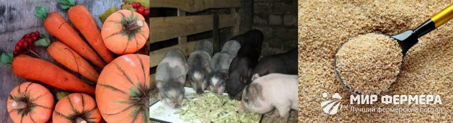 Кормление вьетнамских свиней