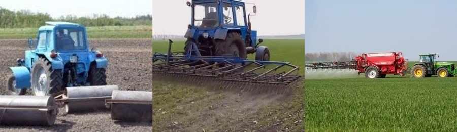 Как ухаживать за пшеницей