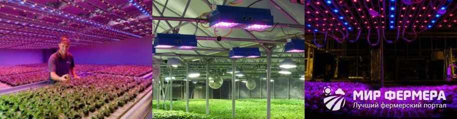 Светодиодные лампы для теплиц