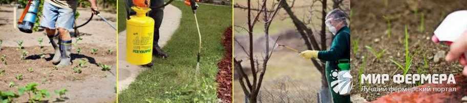 Ураган Форте обработка сорняков