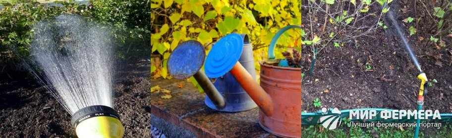 Полив малины осенью