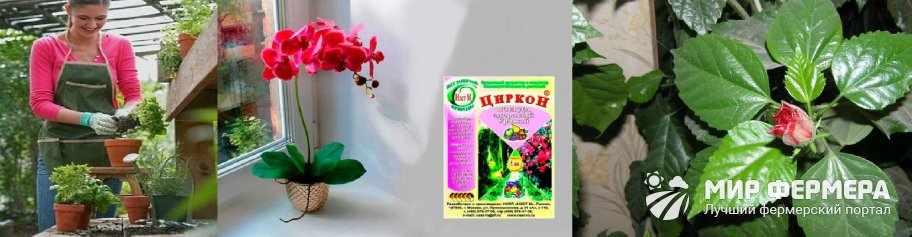 Удобрение Циркон для комнатных цветов