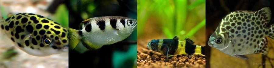 Солоноводные рыбки