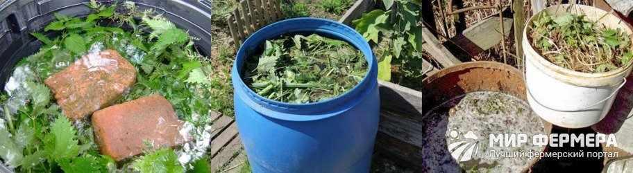 Дрожжи с крапивой для рассады томатов