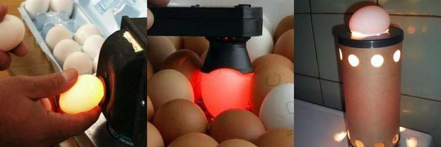 Проверка яиц овоскопом