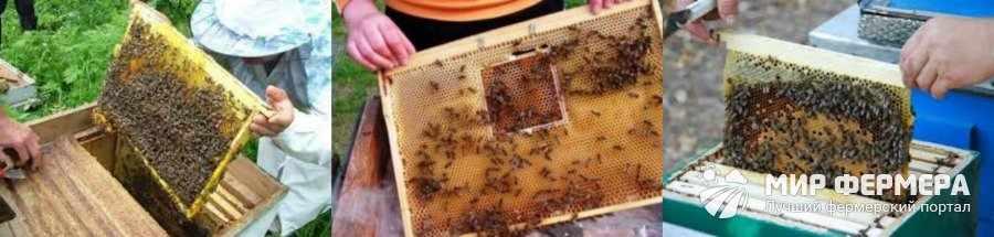 Пчелиные соты виды и расположение