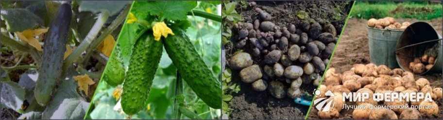 Удобрение Biogrow эффективность