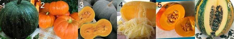 Сорта тыквы для семечек