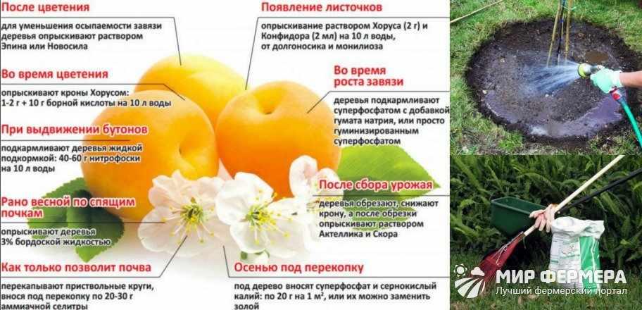 Удобрение абрикоса