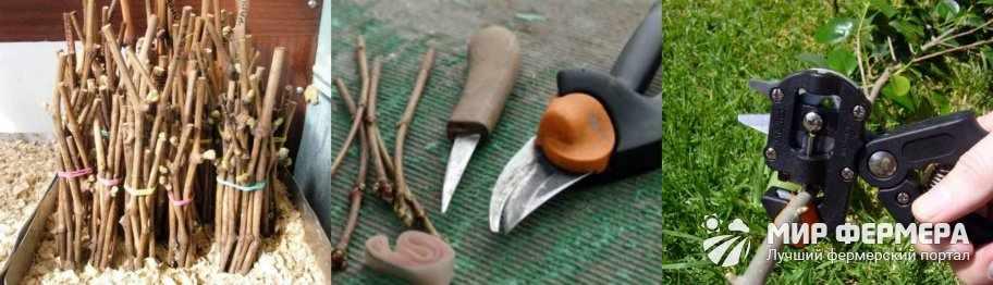 Инструменты для прививки яблони