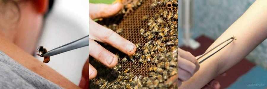 Применение пчелиного яда в народной медицине