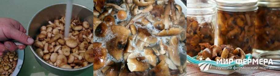 Как консервировать грибы