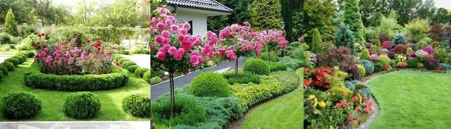 Розы и хвойные культуры