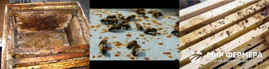 Как определить понос у пчел