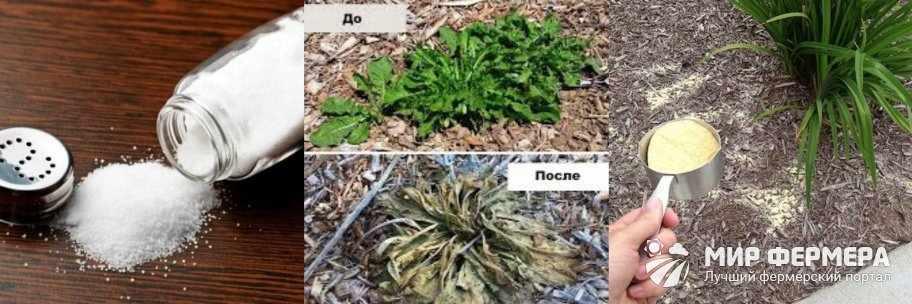 Как уничтожить сорняки солью