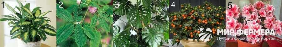 Какие растения нельзя сажать дома