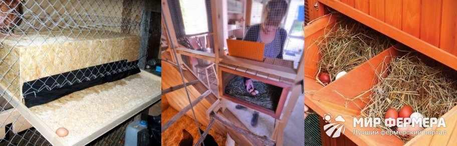 Уход за гнездами для несушек