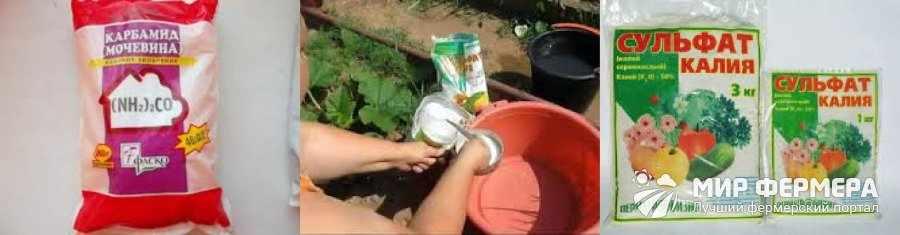 Удобрения для гладиолусов