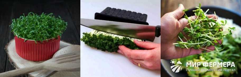 Зелень кресс салат
