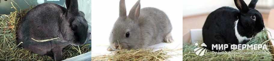 Сено для кроликов на зиму