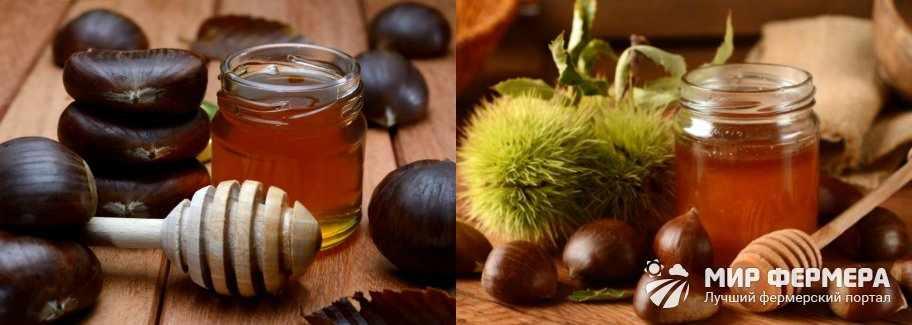 Каштановый мед польза и вред