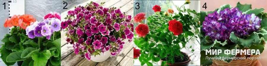 Как ухаживать за цветами дома