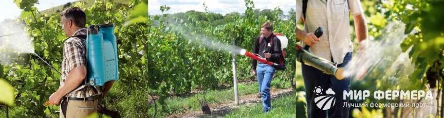 Профилактика болезней винограда