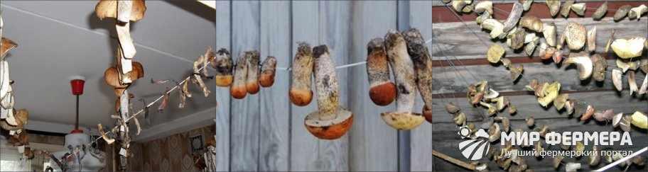 Как сушить грибы на нитке