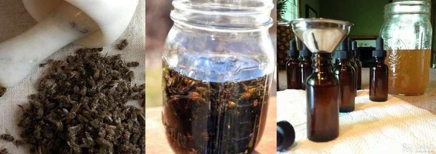 Отвар из пчелиного подмора: приготовление
