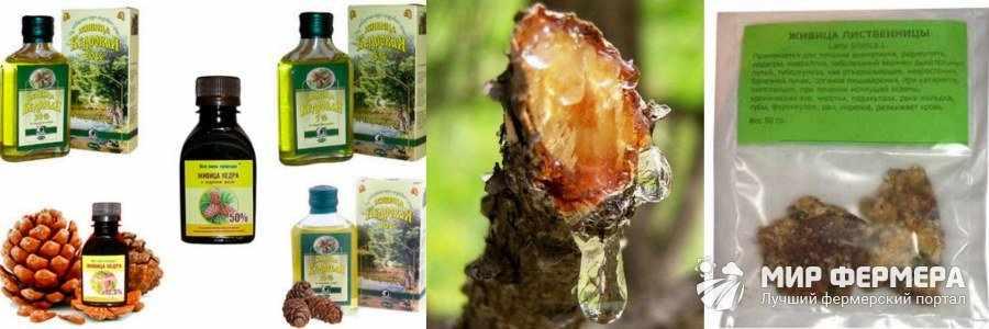 Лечение смолой хвойных деревьев