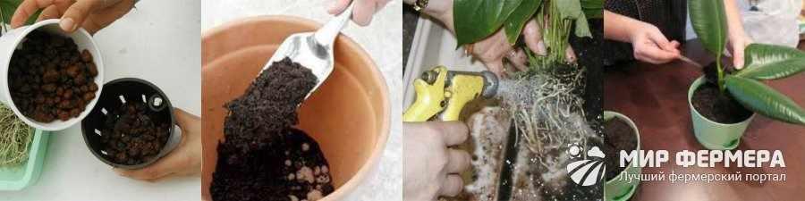 Как посадить комнатное растение в горшок