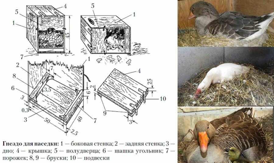 Гнездо для гусыни