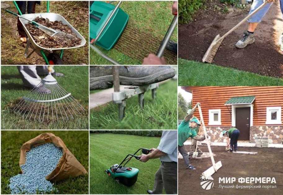 Как посеять газон своими руками