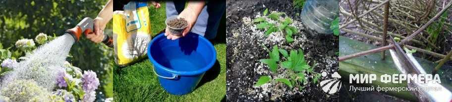 Уход за клематисом весной и летом